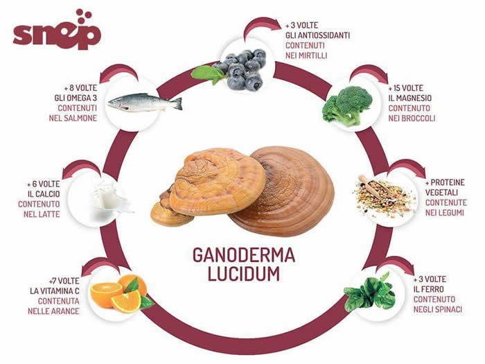 Ganoderma Lucidum SNEP